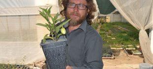 Manisa'da yetiştirdiği tropikal meyveye sipariş yağıyor