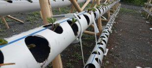 Fikir muhteşem Su borusunda çilek yetiştiriyor