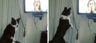 9 Aydır Görmediği Sahibini Televizyonda Görünce Köpek Bakın Nasıl Delirdi