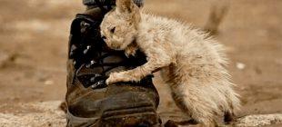 'Çirkin' Adını Verdikleri Sokak Kedisini Kimse Sevmiyordu – Kedi Son Nefesini Verirken Görenleri Ağlattı