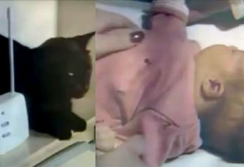 Kedinin Sesini Bebek Telsizinden Duyup Bebeğin Odasına Gittiler – Bebeğin Halini Görünce Hemen Ambulansı Aradılar
